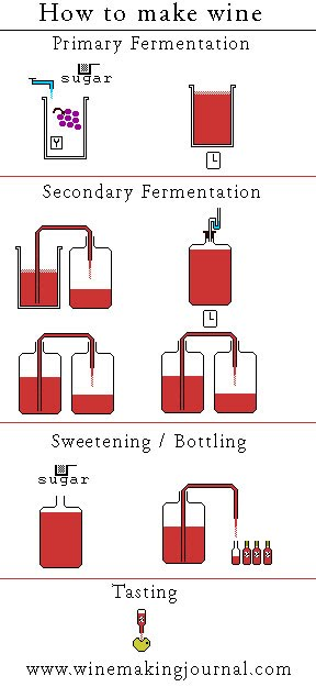 How To Make Wine Diagram